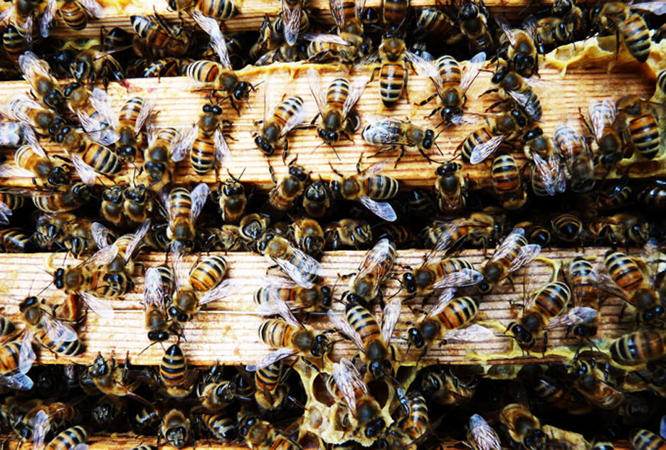 Bierne tilbage i byen rune fjord studio